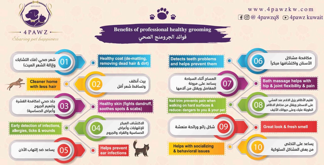 https://www.4pawzkw.com/wp-content/uploads/2021/05/Benefits-of-Grooming-1280x652.jpg